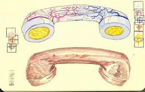 CalfMoon: Vestigial Organs - A001-A008  Vestigial