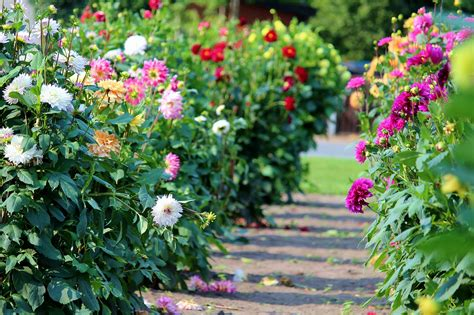 best summer flowers to plant top 28 flowers to plant in for summer bloom favorite summer blooming perennials hgtv