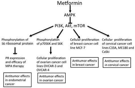metformin  candidate   treatment  gynecological