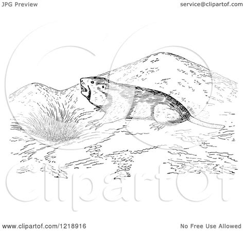 gopher clipart black and white clipart of a black and white pocket gopher outside a den