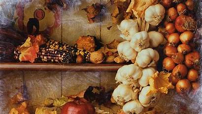 Autumn Harvest Wallpapers Hintergrundbilder Frei Windows Bild