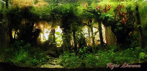 Aquascape World by Aquascape Of The Month June 2015 Quot Himalayan Forest