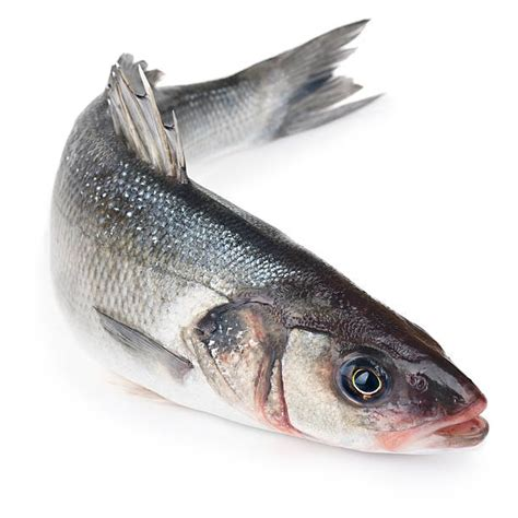 sea bass fish sea bass pictures images and stock photos istock