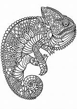 Chameleon Coloring Chameleons Patterns Complex Pages Adult Printable Adults Lizards Animals sketch template