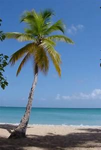Bilder Von Palmen : 42 richtig einzigartige bilder von palmen ~ Frokenaadalensverden.com Haus und Dekorationen