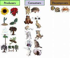 Producers, Consumers, and Decomposers | Science 6 at FMS