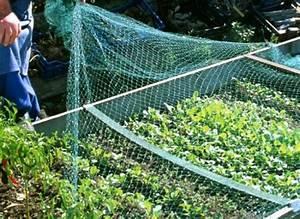 Filet De Protection Jardin : proteger los cultivos con medios f sicos ~ Dallasstarsshop.com Idées de Décoration