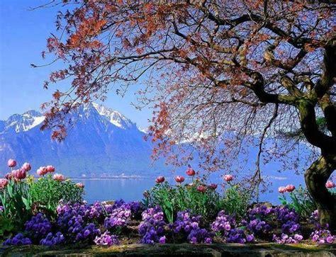 printemps si e social quelques images paysages fleurs printemps