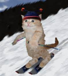 cat skiing cat ski skier skiing cats kitten kittens winter snow