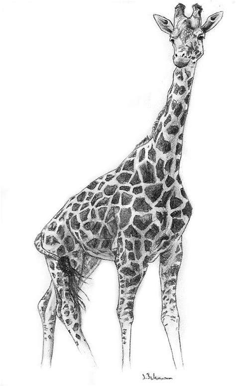 image detail  charcoal giraffe  fixedexpression