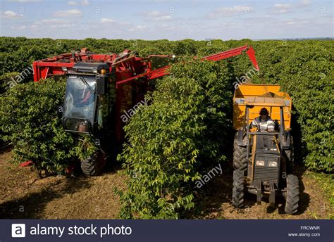 Choose from over a million free vectors, clipart graphics, vector art images, design templates, and illustrations created by artists worldwide! Mechanical harvesting of coffee - Variety New World Stock Photo: 100472563 - Alamy