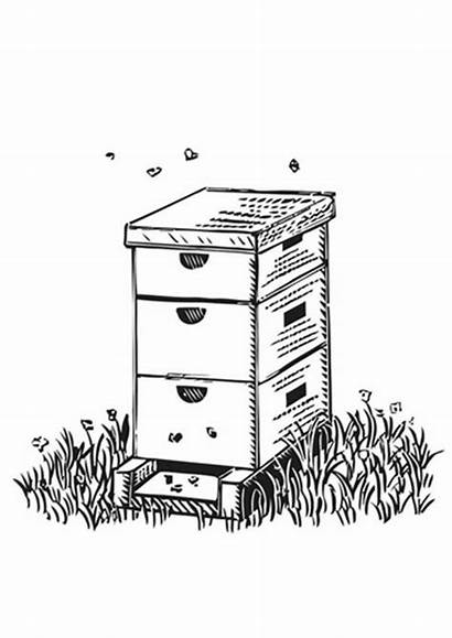 Coloring Beehive Box Honey Pages Farm Shaped