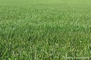Muss Der Rasen Nach Dem Düngen Gewässert Werden : moos auf dem rasen dauerhaft entfernen die besten tipps garten hausxxl garten hausxxl ~ Yasmunasinghe.com Haus und Dekorationen