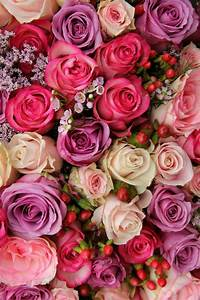 Sweet Pretty Rose : rf wallpaper flowers rose wallpaper flower backgrounds ~ A.2002-acura-tl-radio.info Haus und Dekorationen