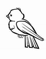 Robin Coloring Bird Pages sketch template
