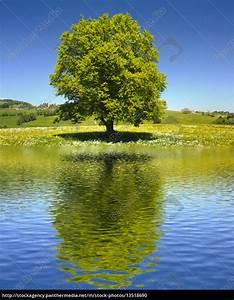Baum Am Wasser : gro er alter baum als einzelbaum mit spiegelung im see ~ A.2002-acura-tl-radio.info Haus und Dekorationen