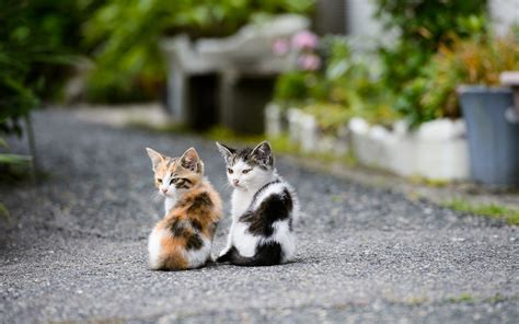 Male Vs Female Kitten Which Should You Get? Purrfect