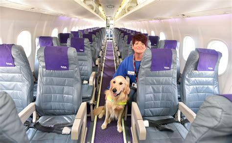 animali in cabina alitalia cani in aereo basta stiva con delta viaggeranno in