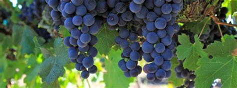 Acheter Carte Des Vignobles Français by La Carte De Vignobles De Les Vignobles Fran 231 Ais