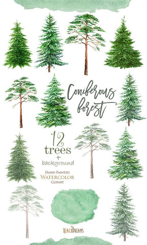 watercolor clipart spruce pine conifer trees forest