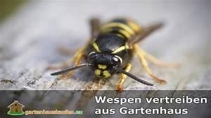 Was Hilft Gegen Wespen : wespen vertreiben aus dem gartenhaus was hilft gegen wespen youtube ~ Whattoseeinmadrid.com Haus und Dekorationen