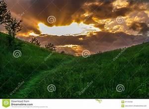 Grass Path Stock Photo - Image: 61143430