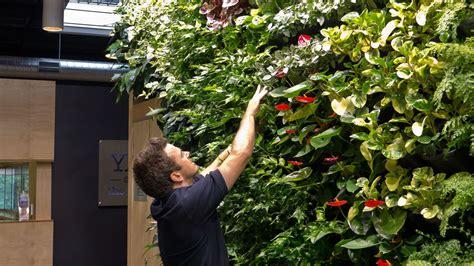 Vertical Garden Maintenance vertical garden maintenance atlantis
