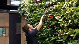 Vertical garden maintenance atlantis aurora for Vertical garden maintenance