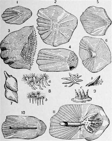 luski ryby wikipedia wolna encyklopedia