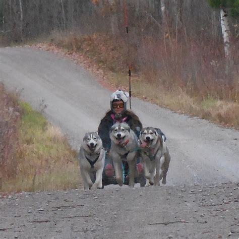 sled dog central fun  page