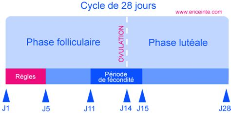 calculer cycle calcul cycle menstruel calcul ovulation grossesse comment calculer cycle menstruel