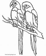 Coloring Pages Tropical Bird Popular sketch template