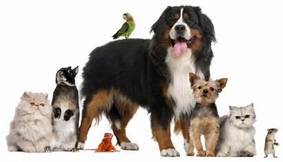 Animal Pets Treated Member Every