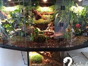 Pflanzen Terrarium Einrichten : 9 besten terrarium bilder auf pinterest terraria terrarium und kinderstube ~ Orissabook.com Haus und Dekorationen