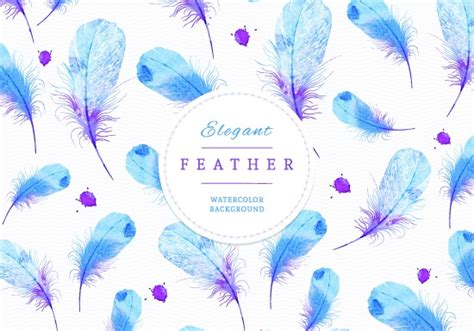 peacock feathers vector art  vector