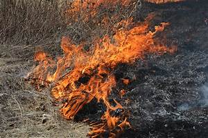 Prescribed Fires | Burning For Deer and Turkey | Bone ...
