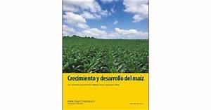 Crecimiento Y Desarrollo Del Maiz  Corn Growth And
