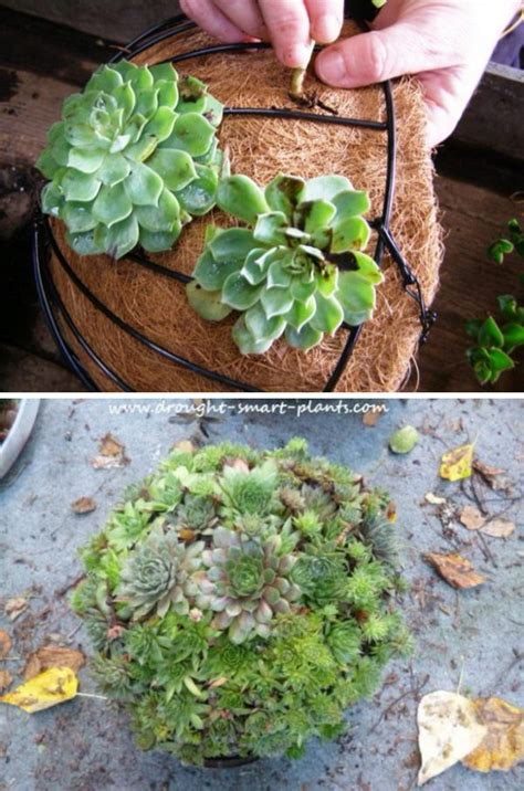 diy succulent garden ideas  tutorials