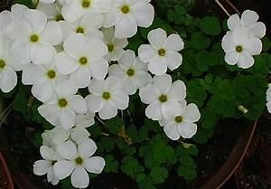 Names Of White Flowers 27 Hd Wallpaper - HdFlowerWallpaper.com