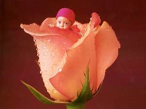 Baby In Flower Wallpapers,Anne Geddes Baby Photography ...