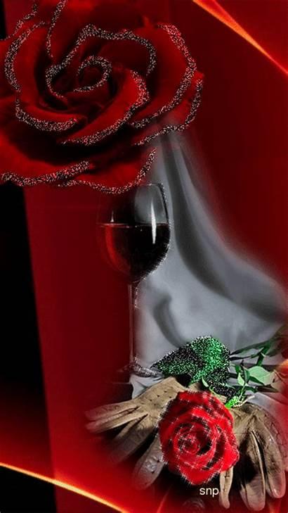 Roses Rose розы Wine красивые красные Mobilmusic