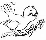 Robin Coloring Bird Pages Singing sketch template