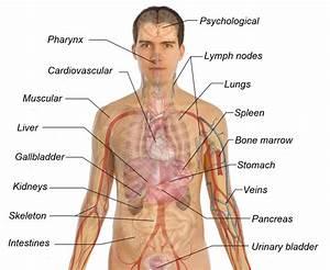 Printable Diagram of the Human Body   Diagram Site