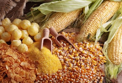 Maize Day | Days Of The Year