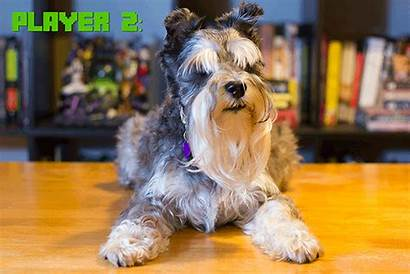 Dog Cleverpet Console Gamertag