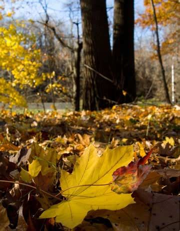why do trees change color why do leaves change color in fall how leaves change color