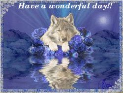 wonderful day wolf good day graphics  facebook