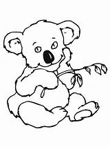 Koala Coloring Pages Bear Printable Colouring Bears Animal Easy Designlooter Leaves Getcoloringpages Library Clipart Popular Results Bestcoloringpagesforkids 1600px 52kb 1200 sketch template