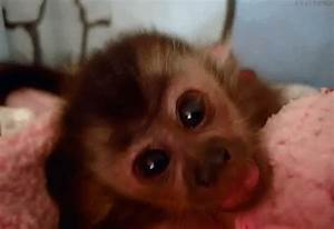Baby Animal Monkey GIF - Find & Share on GIPHY