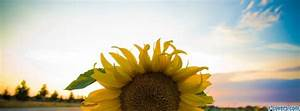 The gallery for --> Vintage Sunflower Facebook Cover
